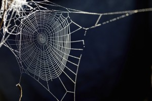 Spider removal Portland OR